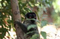 Animals of Madagascar